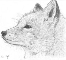 .Fox Sketch. by White-Wolfen