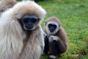 Funky Gibbon by Red-Smurfette