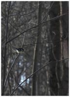 little bird on a twig by Claudia008