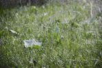 Fresh grass by Elizabeth1P