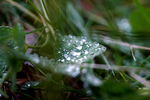 Dewy leaf by starmast3r