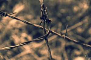 Barbed Wire by HicksGirl