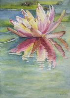 Water Lily by sarisart
