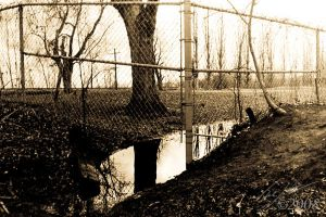 Fence Escape by CasePhoto