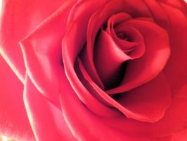 Petals of a Rose by tracy-Me