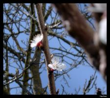 Spring Time by grini