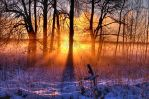 Winter morning by Juhan