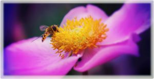 Syrphid fly by hayleyonfire