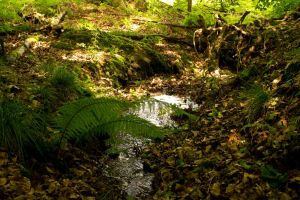 Forest Floor by Preachman