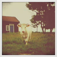 Cow by Beccis1995