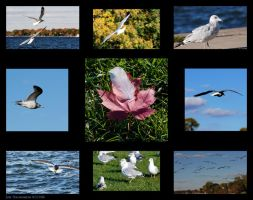 Gulls of the Fall by nofrojeff2000