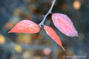 Red leaves. by MarinaPalme