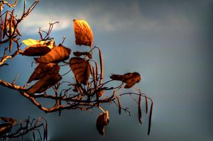 hdr leaves by damndansdawg