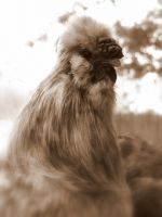 Silkie Rooster Face - Sepia by Toxic-Muffins-Studio