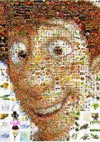 Ratatouille Mosaic by Cornejo-Sanchez
