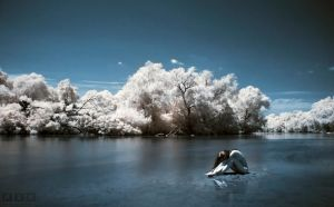 my infrared love 2 by xtzc