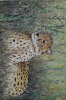 cheetah in the grass by acrylicwildlife