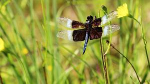 Dragonfly by fractalfiend