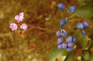 Pink flowers with blueish by Ym2d