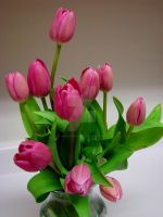 Mother's Day Tulips by TriciaStucenski
