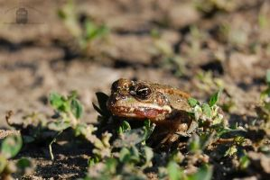 Little frog -1 by morpheus880223