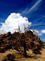 Joshua Tree National Park by vfrrich