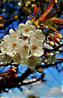 spring flowers 09 by glad2626