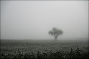 befogged by herbstkind