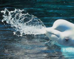 Beluga Always Spits When Angry! by wolfwings1
