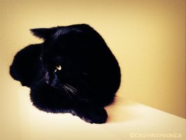 My black cat named Bones by cindyindybones