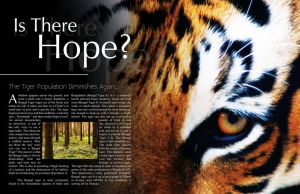 Tiger Magazine Editorial by VisuallySpeaking