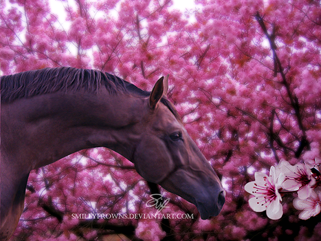 Cherry Blossoms by Smileyfrowns