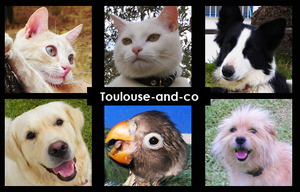 Toulouse and Co by Toulouse-and-Co