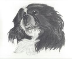 Portrait of a Pekingese by pencil-paradise