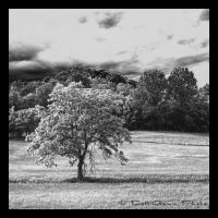The Tree In The Field by DG-Photo