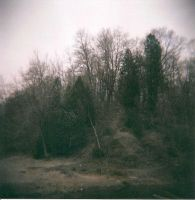 Dead Forest by Lomo440