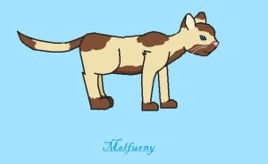 RQ - bobekite's Cat for The Eight Kingdoms by melfurny