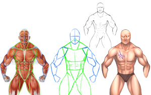 Muscles:. Anatomy Practice by Saige199