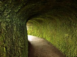 Moss Pathway by georgie1717