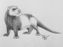 Ferret by SamanthaBranch
