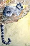 Ring Tailed Lemur by ZulayaWolf