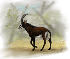 Sable Antelope by ElreniaGreenleaf