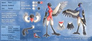 New Reference Sheet - Bullfinch by luthien368