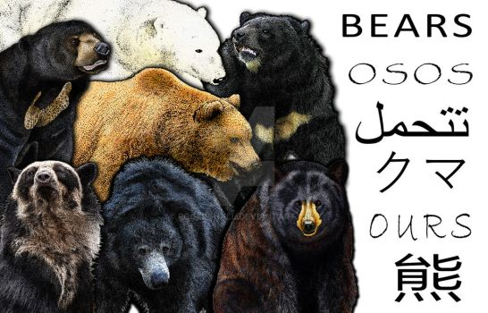 Bears Collage by rogerdhall