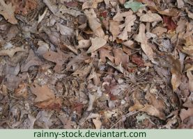 Forest Floor- STOCK by Rainny-Stock