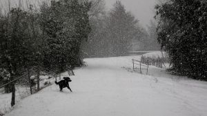 Dog in snow by AUJEANPAS