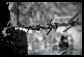 Barb wire by esotsm