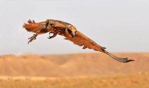 Falcon IV by omar-s