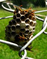 Paper Wasp Nest by Annas-Day-Dreams