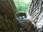 Nest by Vixis24m